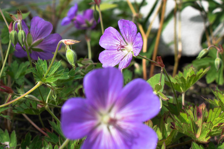 2a-tuin-met-vijver-en-spiegel-koikarpers-overzicht