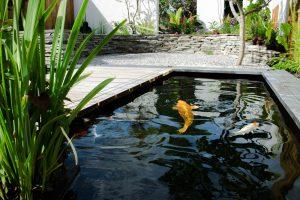 Maatwerk - diepe koi vijver met externe beplanting